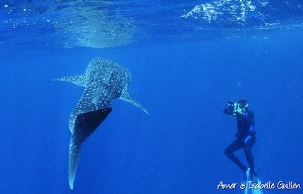 Mexique – Voyage photo sous-marin «Requins baleines et cénotes»