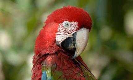 Perou – Voyage photo animalier «Immersion en Amazonie»