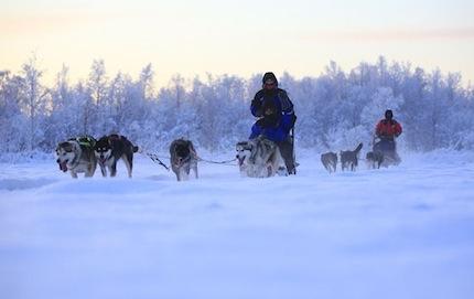 Finlande – Expédition chiens de traineaux