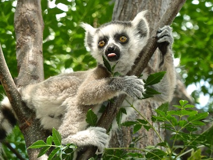Madagascar – Voyage sur mesure