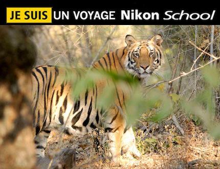 Inde – Voyage photo animalier Nikon School «Tigre, dans les yeux de shere khan»