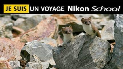 France – Voyage photo animalier «Sur les traces de la faune alpestre» Beaufortin