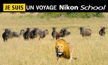 Tanzanie – Voyage photo animalier Nikon School