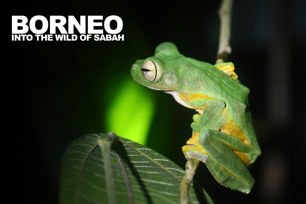 Borneo – Film «Into the wild of Sabah» par Jorge Camilo Valenzuela