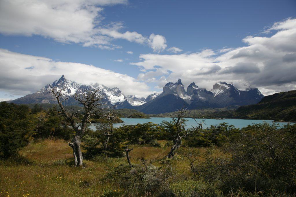 Patagonie – Voyage Photo et Observation Animalière  «A la rencontre du Puma des Montagnes»