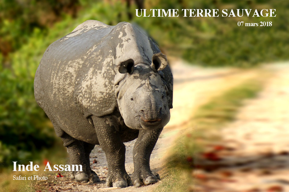 Assam – Voyage Safari Animalier
