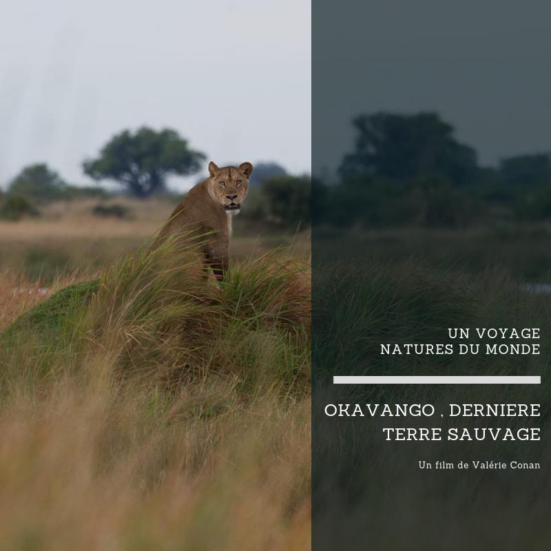 Okavango, dernière terre sauvage