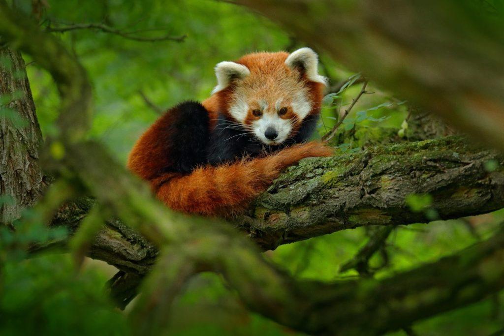 Inde – Voyage photo animalier au Sikkim